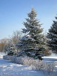дерево из бисера елка - О том, как плести бисером.