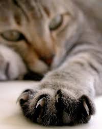 Поцарапал кот нужны прививки
