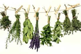 лекарственные травы 6