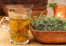 лекарственные травы 4