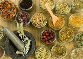 лекарственные травы 5