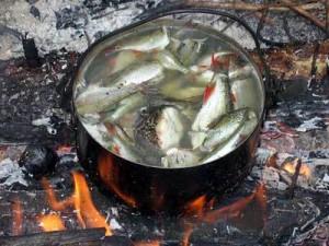 рыба 10