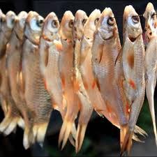 рыба 14