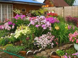 цветы 2