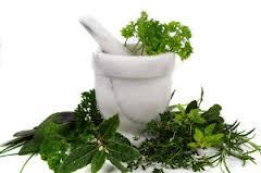лекарственные травы 7