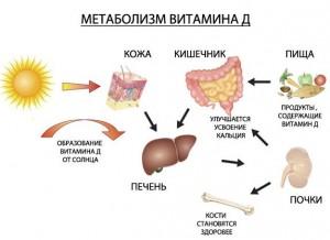 витамин-D 6